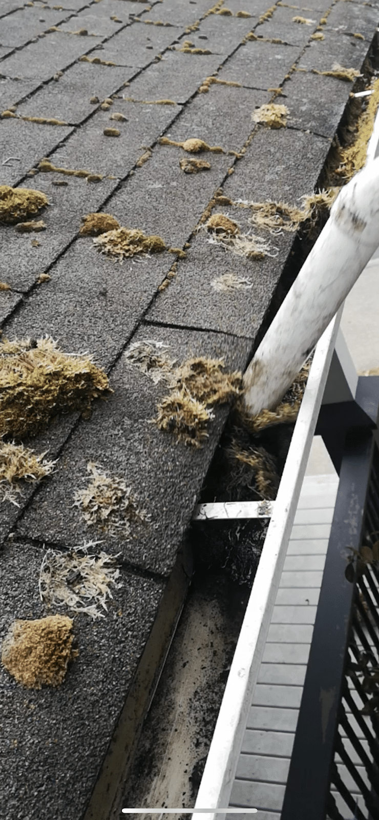 Cleaning Moss off of your Roof in Vancouver